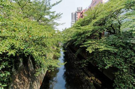 東新宿・早稲田